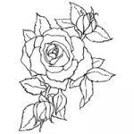 timeless-rose-1424551076-jpg