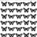 butterflies-jpg